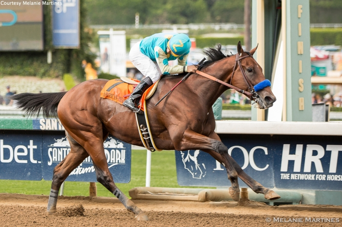 American Pharoah with Jockey Victor Espinoza (at the Arkansas Derby). The three-year-old Colt made history on Saturday, winning the first Triple Crown in 37 years.